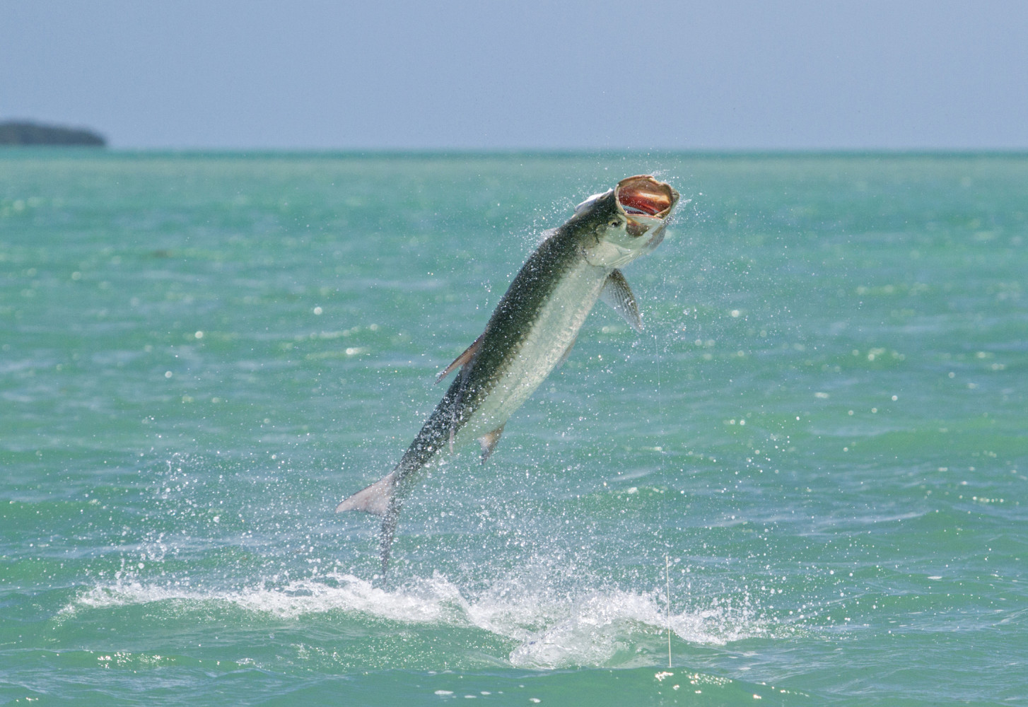 Image of a tarpon jumping out of the water on an Outgoing Angling fishing adventure in the Florida Keys.