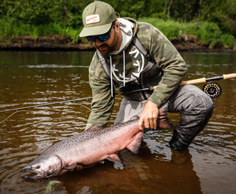 An image of a salmon in the wild streams and rivers of alaska.