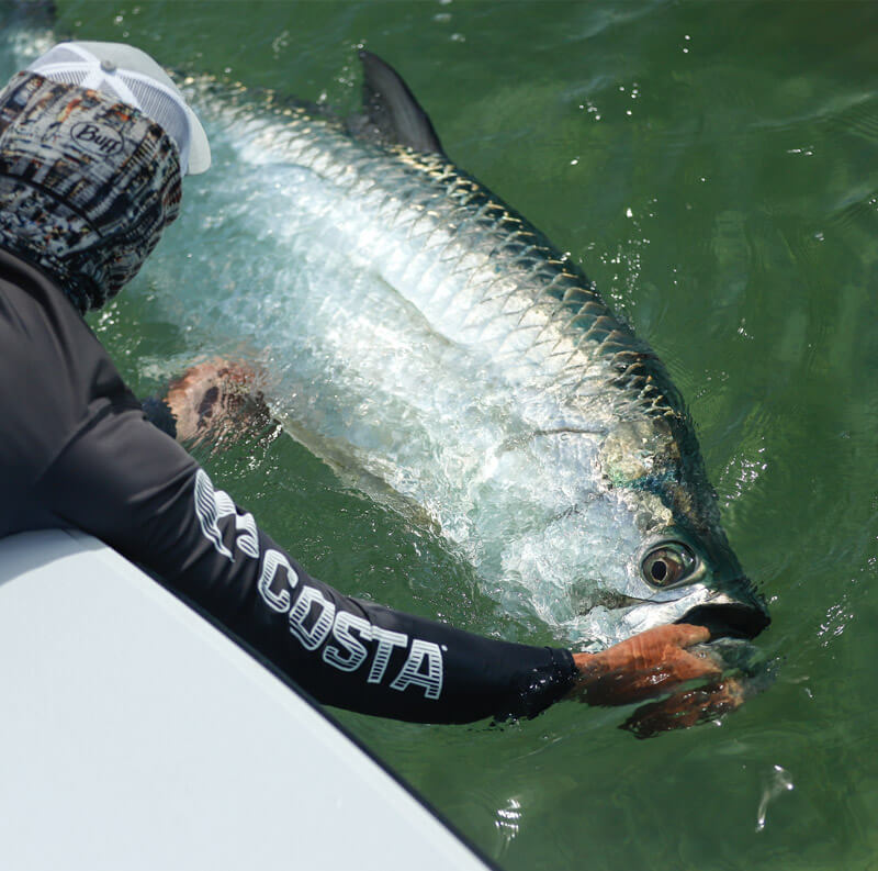 An image of a tarpon caught on an Outgoing Angling fishing excursion.