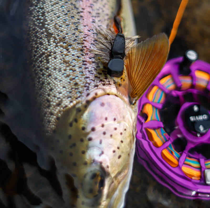 An image of a fly rod next to a rainbow trout in alaska on an outgoing angling adventure.