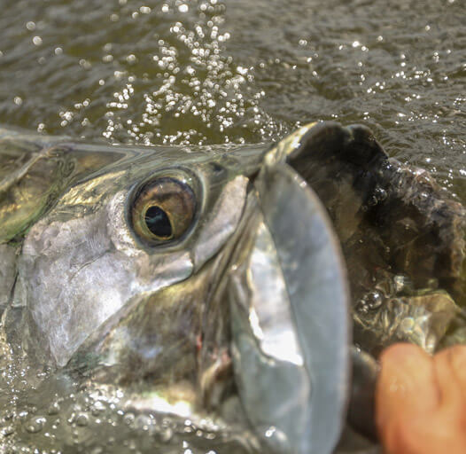 An image of tarpon fishing in the Florida Keys.