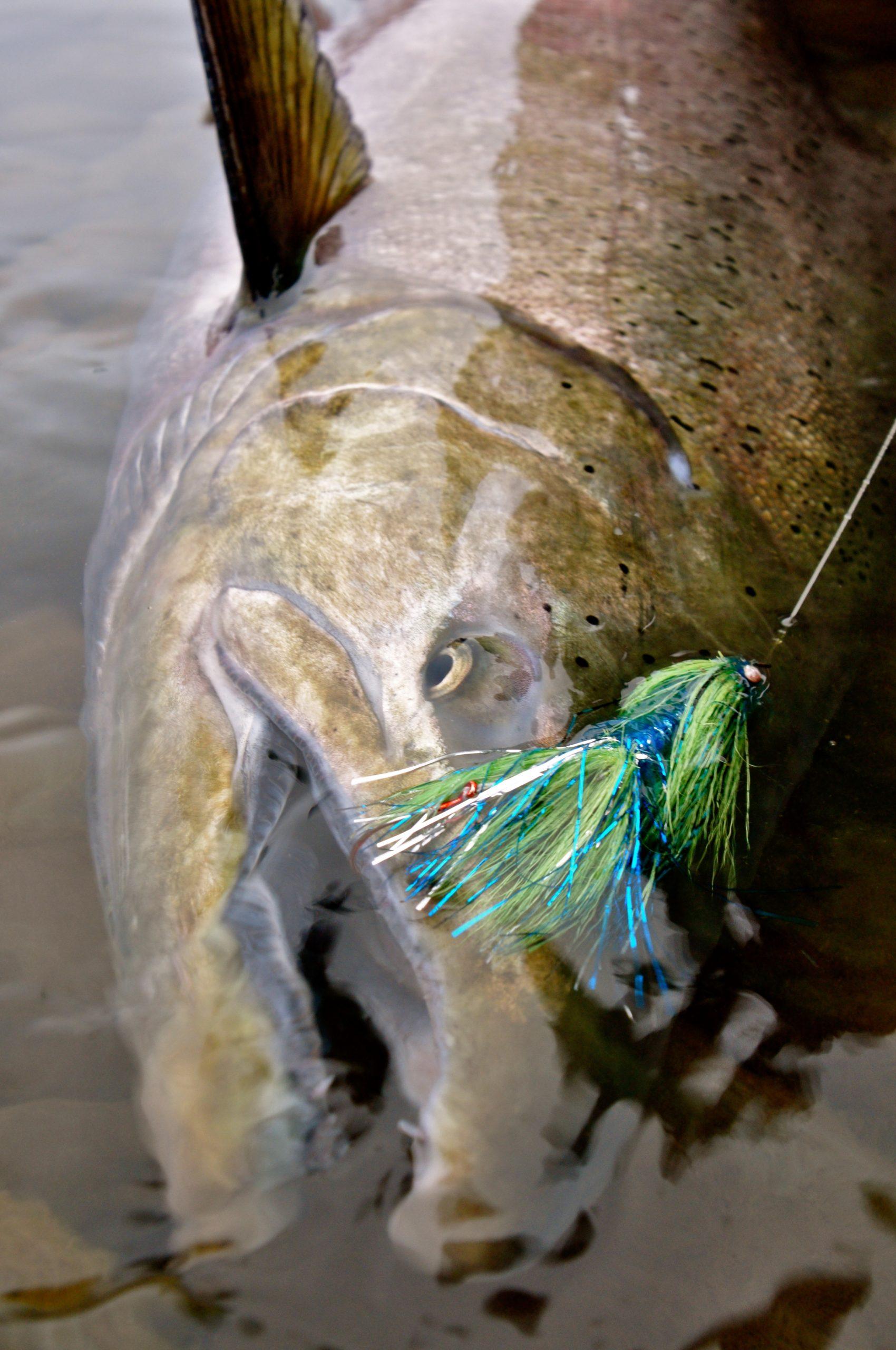 alaska king salmon on spey rod