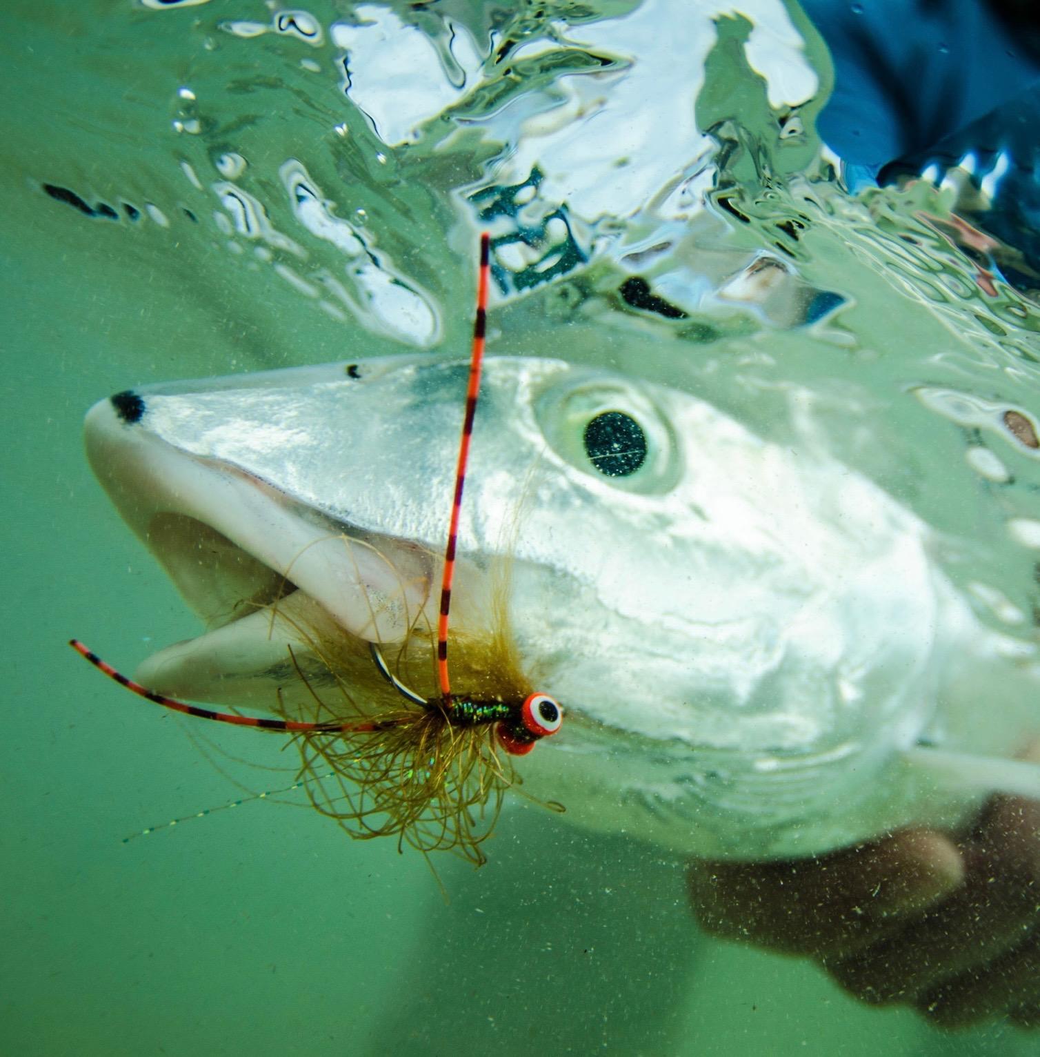 bonefish on fly