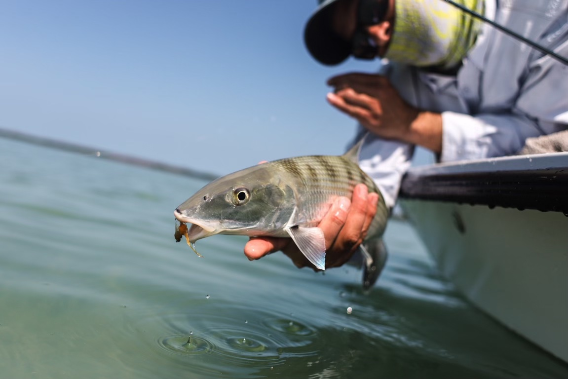 lower keys bonefish